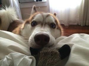 Cute Animals Making Surprised Faces (30 photos) 6