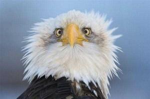Cute Animals Making Surprised Faces (30 photos) 8