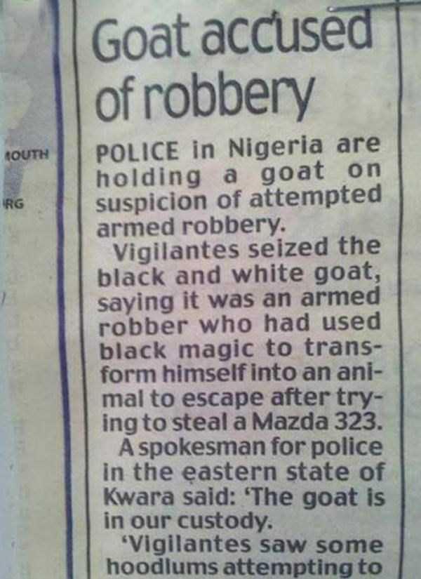 stupid-criminals (21)
