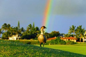 Unexpected Things Spotted at the End of a Rainbow (31 photos) 31