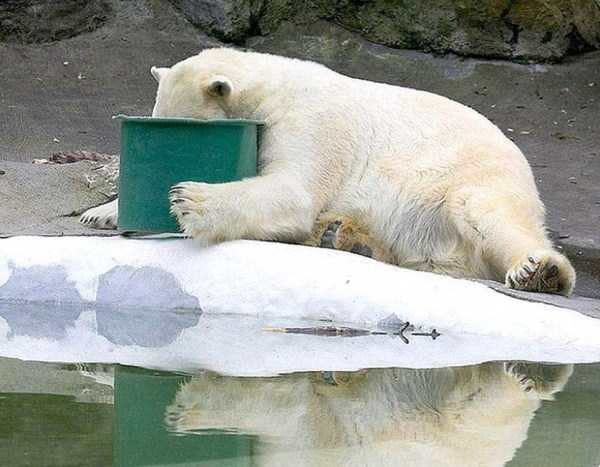 animals-with-hangover (10)