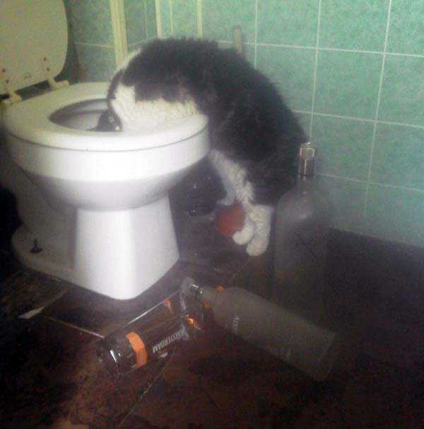 animals-with-hangover (11)