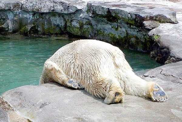 animals-with-hangover (15)