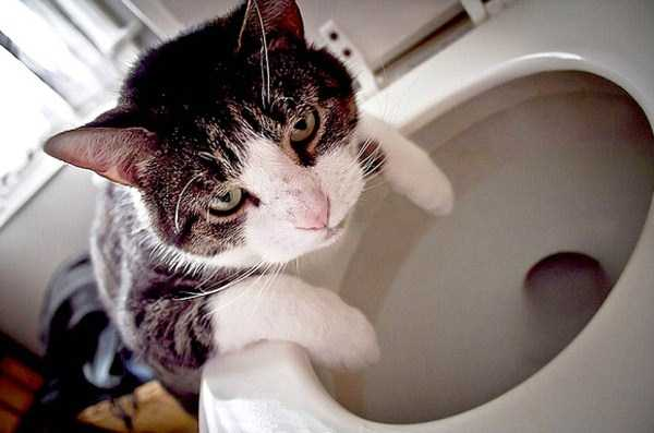 animals-with-hangover (16)