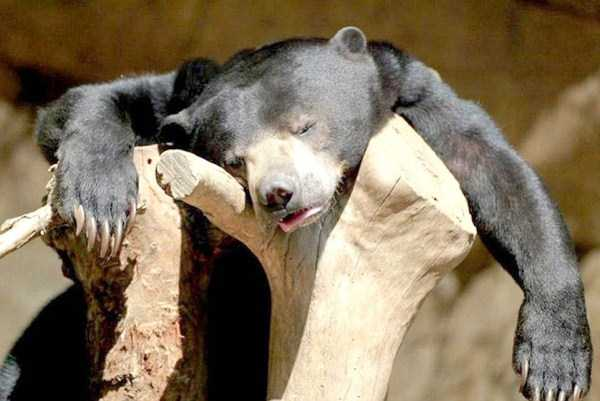 animals-with-hangover (17)