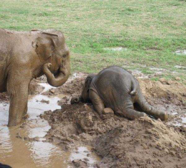 animals-with-hangover (25)