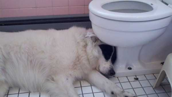 animals-with-hangover (30)