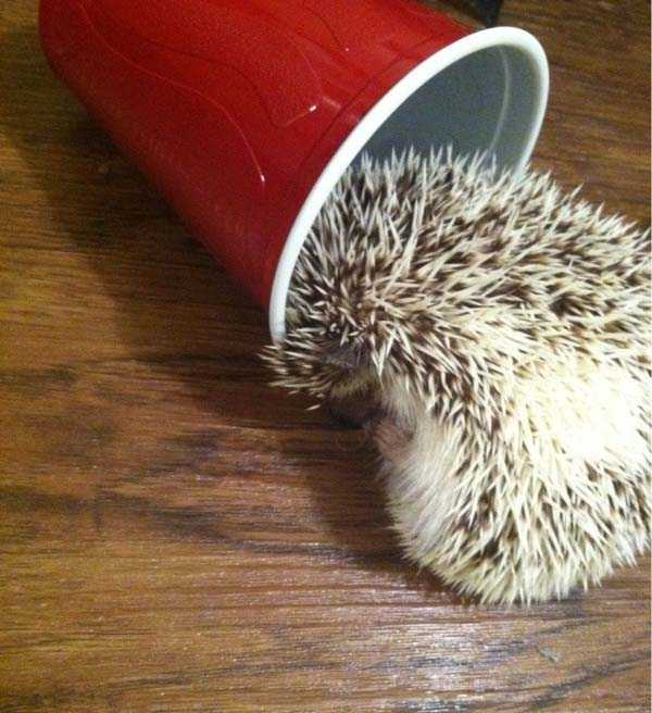 animals-with-hangover (34)