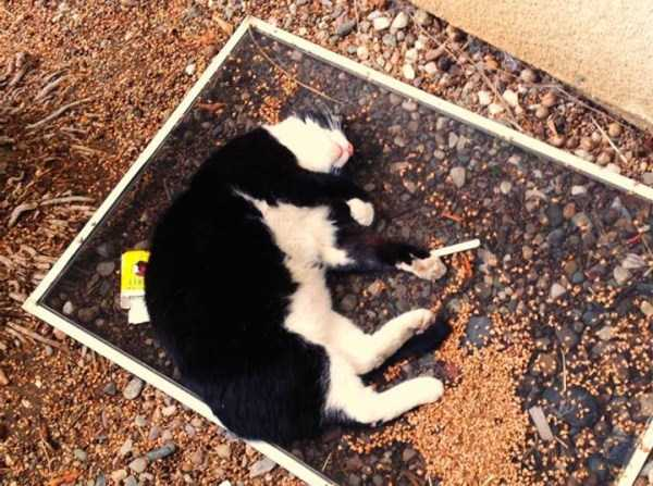 animals-with-hangover (35)