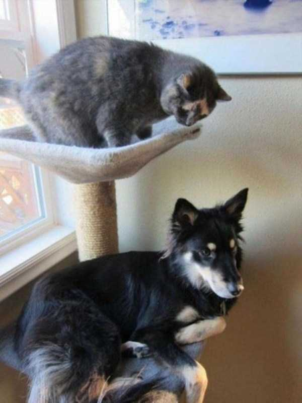dogs-acting-like-cats (14)