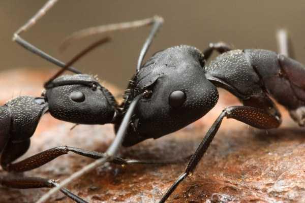 macro-pictures-of-ants (1)