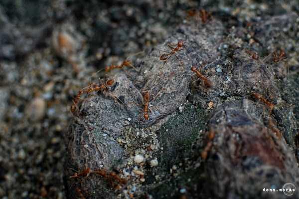 macro-pictures-of-ants (19)