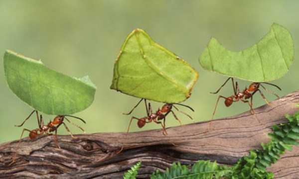 macro-pictures-of-ants (22)