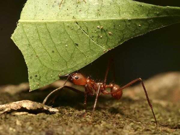 macro-pictures-of-ants (26)