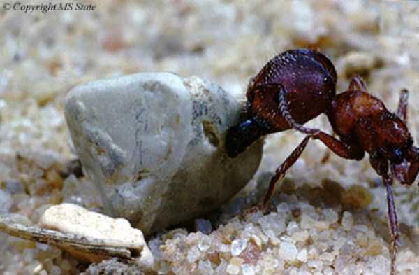 macro-pictures-of-ants (27)