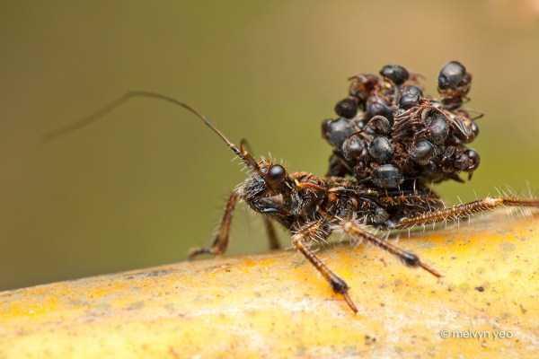 macro-pictures-of-ants (29)