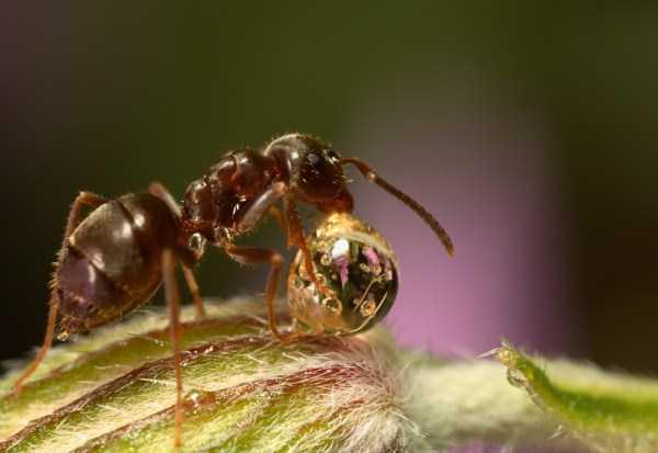 macro-pictures-of-ants (4)