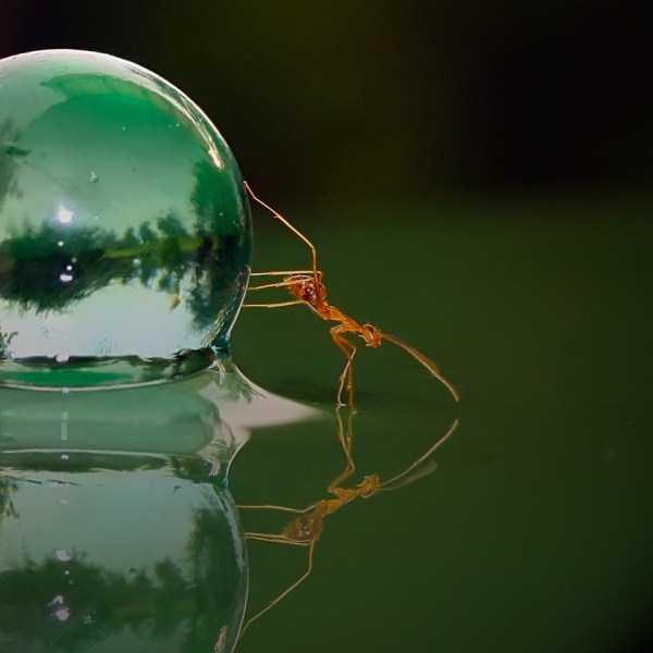 macro-pictures-of-ants (5)
