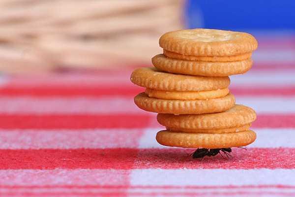 macro-pictures-of-ants (6)