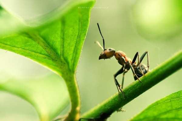 macro-pictures-of-ants (7)