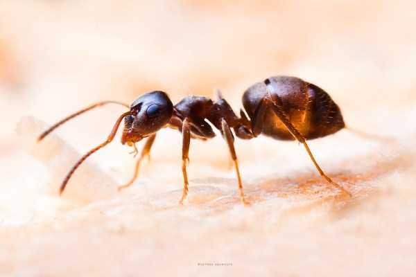 macro-pictures-of-ants (9)