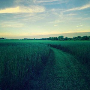 45 Awesome Landscape Photos Taken With an iPhone (45 photos) 8