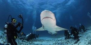 Scary Tiger Shark Jaws (7 photos) 2