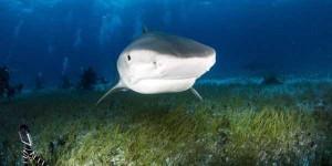 Scary Tiger Shark Jaws (7 photos) 3
