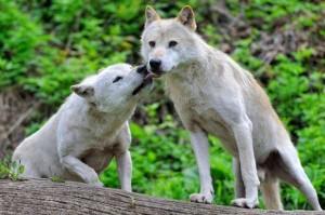 50 Adorable Animal Couples (50 photos) 1