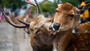 50 Adorable Animal Couples (50 photos) 11