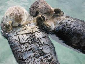 50 Adorable Animal Couples (50 photos) 14