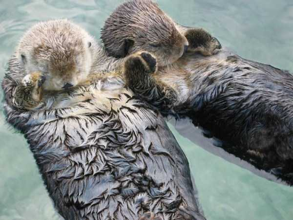 animal-couples-in-love (14)