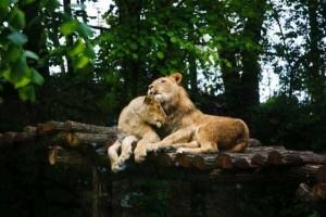 50 Adorable Animal Couples (50 photos) 15
