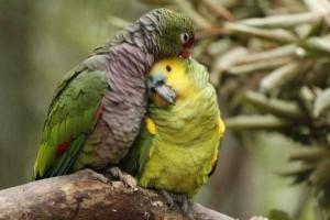 50 Adorable Animal Couples (50 photos) 16