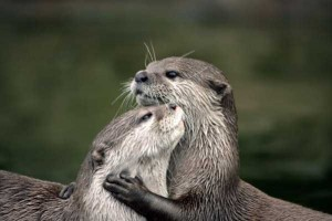 50 Adorable Animal Couples (50 photos) 17