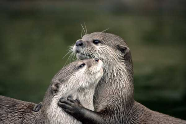 animal-couples-in-love (17)