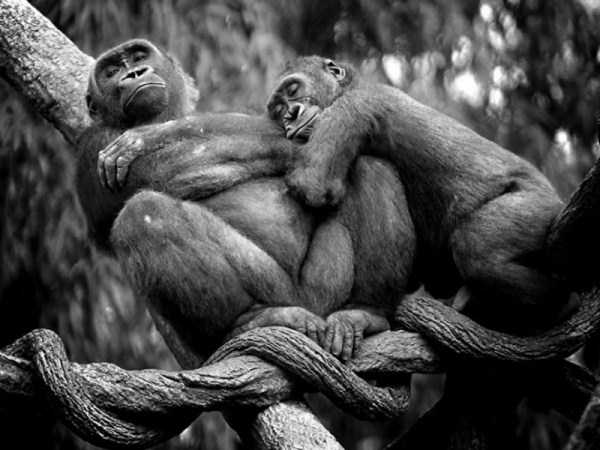 animal-couples-in-love (18)