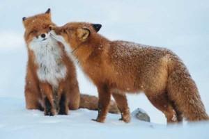 50 Adorable Animal Couples (50 photos) 19