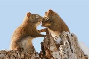 50 Adorable Animal Couples (50 photos) 2