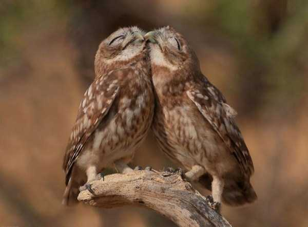 animal-couples-in-love (21)