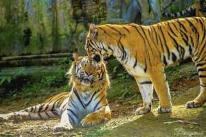 50 Adorable Animal Couples (50 photos) 24