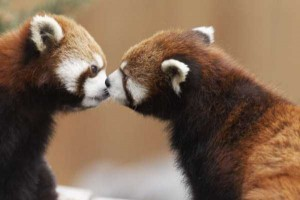 50 Adorable Animal Couples (50 photos) 25