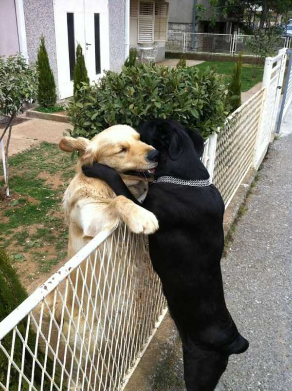 animal-couples-in-love (28)