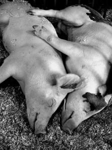 50 Adorable Animal Couples (50 photos) 34