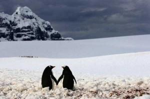 50 Adorable Animal Couples (50 photos) 36