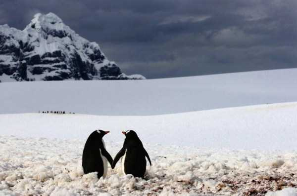 animal-couples-in-love (36)