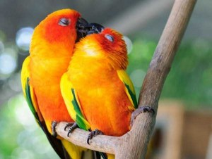 50 Adorable Animal Couples (50 photos) 39