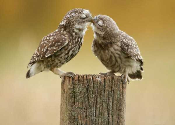 animal-couples-in-love (43)