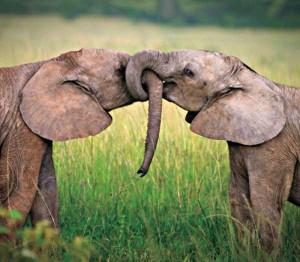 50 Adorable Animal Couples (50 photos) 45