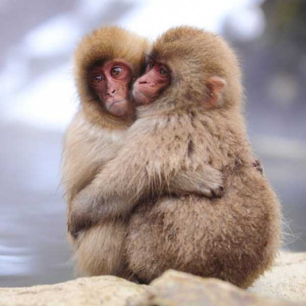 animal-couples-in-love (47)